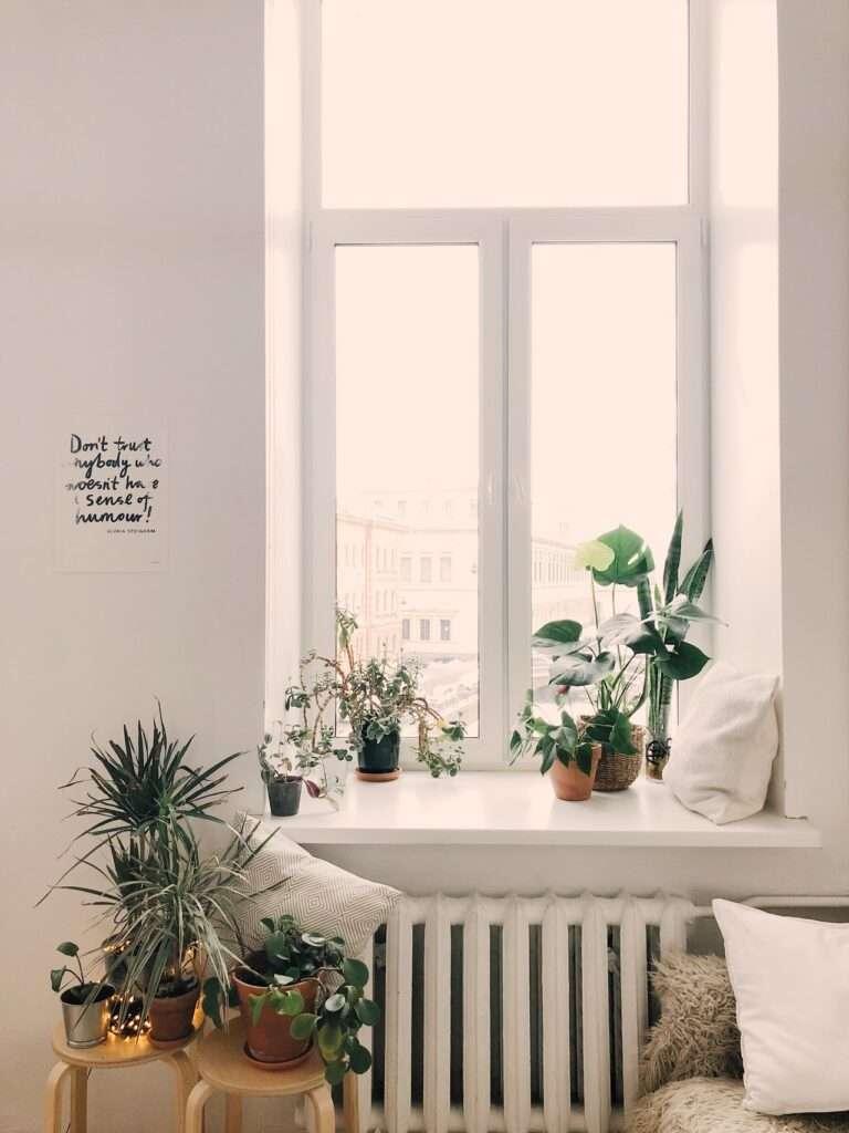 Décoration d'une fenêtre avec des plantes