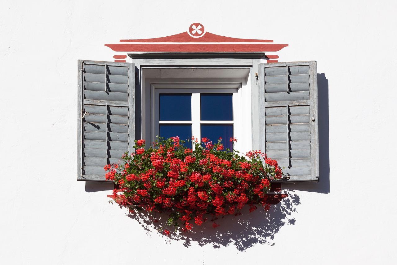 Fleur à la fenêtre