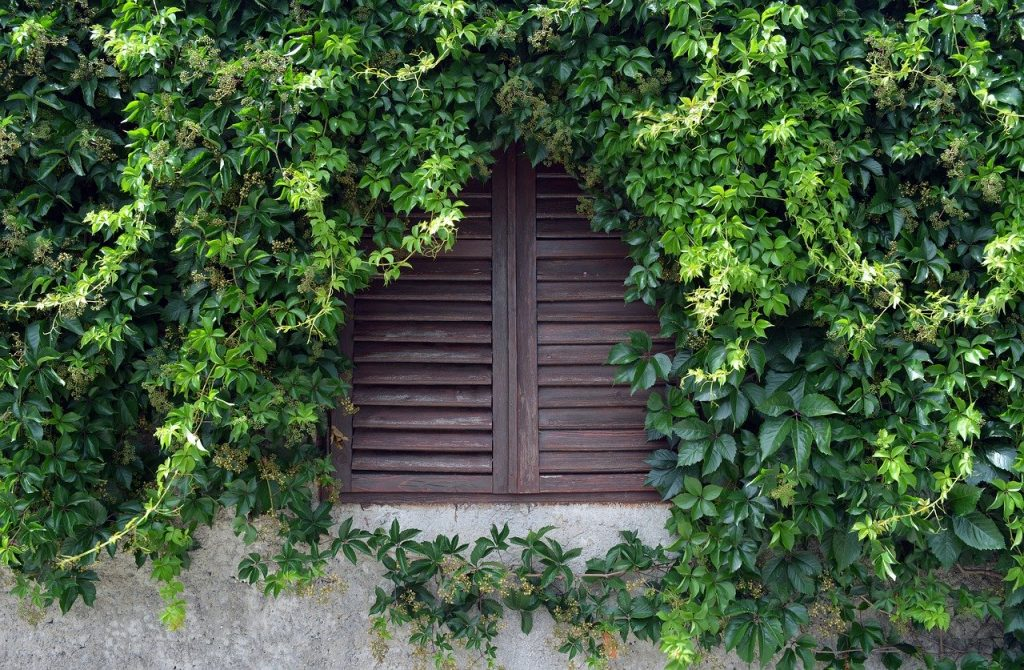 Mur végétal pour fenêtre